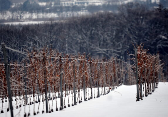 2013.01.26 Winnica Srebrna Góra zima. Fot. Marek Lasyk (21)