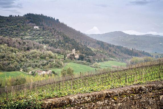 Selvapiana Chianti_Vineyards