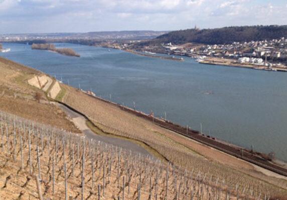 allendorf1_rheingau_vineyards_web